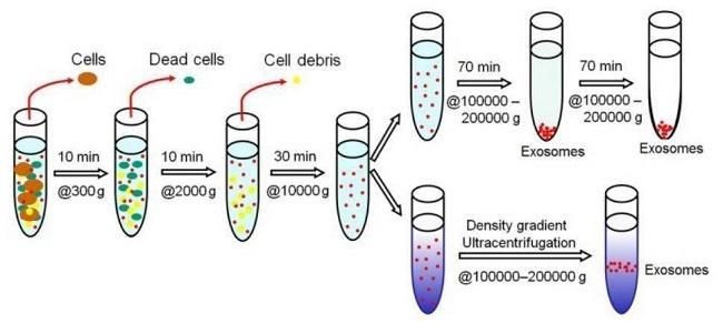 XY精子分离术流程图