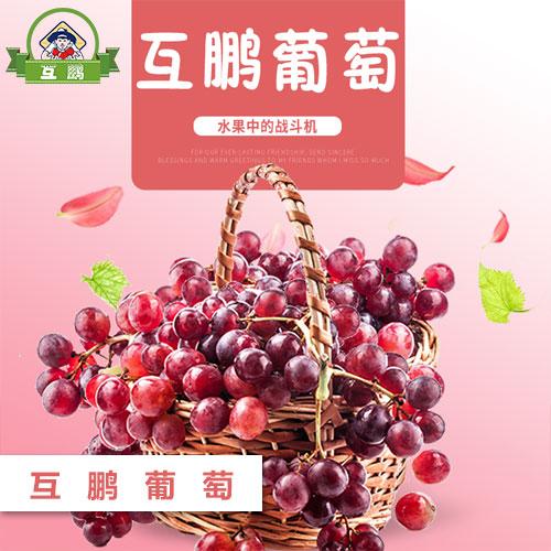 BG大游视讯葡萄