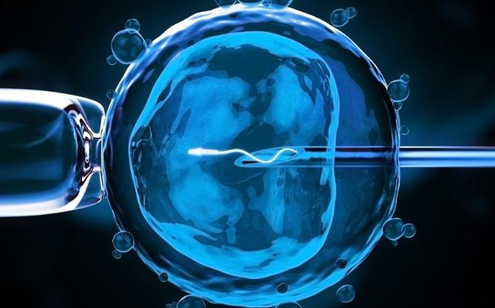 在试管婴儿备孕期间怎样养卵养子宫