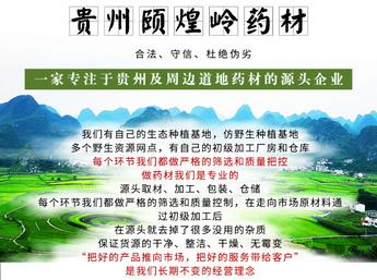 贵州野生何首乌鲜统货 可年供10吨左右 品质好