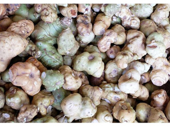 贵州野生红花黄精鲜品直供 由于是鲜品不方便积货需提前预定准备