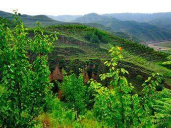 农村退耕还林种植什么前景好,退耕还林有哪些政策?