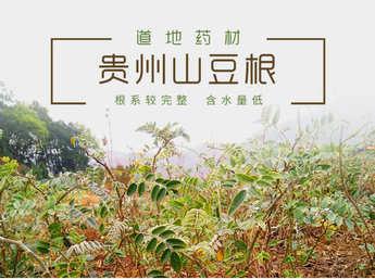 山豆根种苗 岩苦参种苗 苦参种苗 整株高25公分以上 植株完整  自然环境生长 成活率高