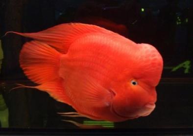 财神鱼起头需要什么条件