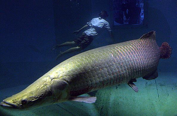 海象鱼吃什么