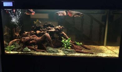 龙缸背景对龙鱼饲养有影响吗?