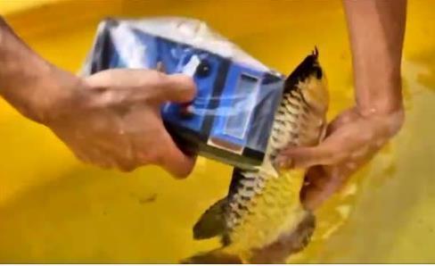 龙鱼芯片是什么