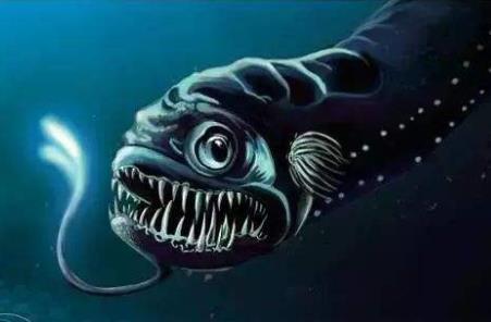 深海龙鱼是一种龙鱼吗?