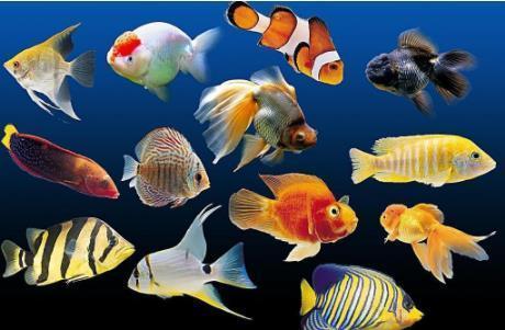 哪种热带观赏鱼非常好看?