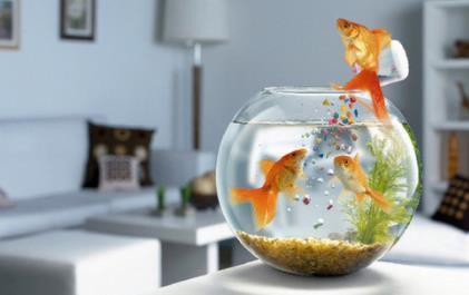 鱼缸在养鱼前做哪些准备?