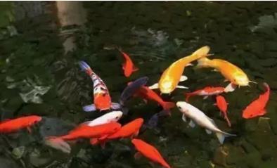 新人养鱼常见误区有哪些