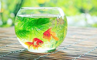 如何尽量避免鱼缸养鱼死亡