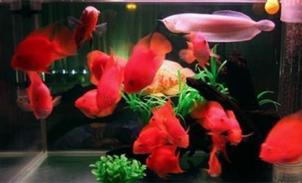 风水学中鱼缸放卧室会不会影响健康?