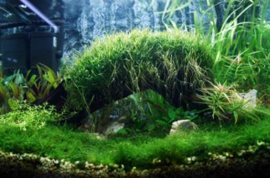 水族箱水草肥料有哪些?