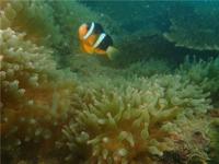 深圳南澳杨梅坑海底潜水体验活动—深潜(浮潜)