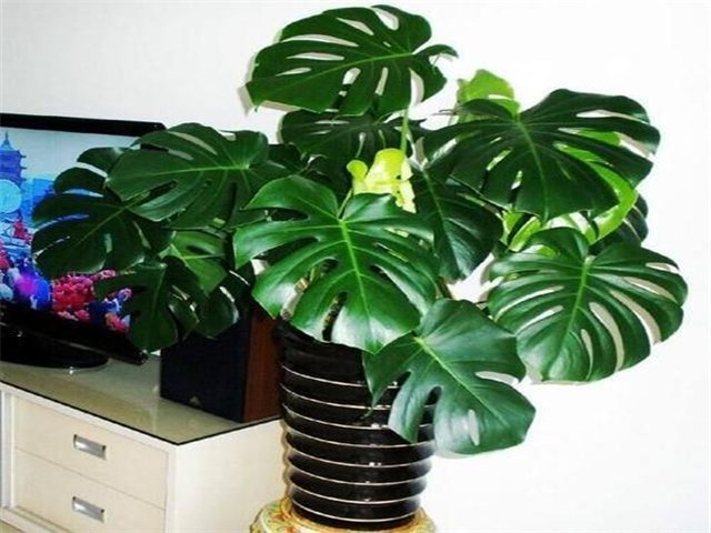 新房用植物净化甲醛需注意什么原则?