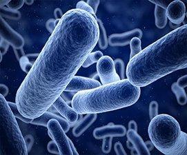 271x225 肠道细菌图