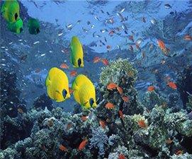 海水缸臭氧机用量