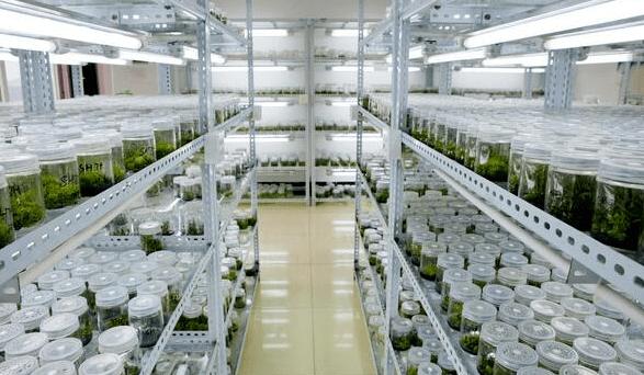 植物组织培养实验室设计