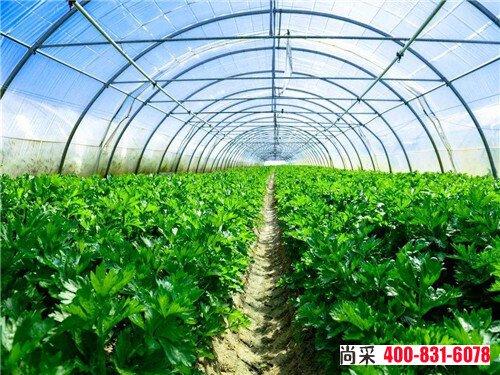 蔬菜根结线虫病怎么治?附防治方法