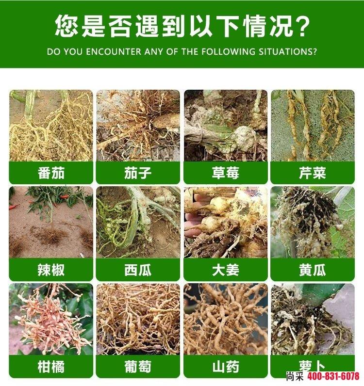 蔬菜根结线虫病怎么治