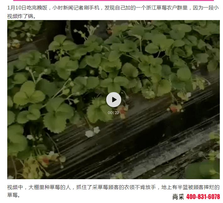 河南尚采温馨提醒:草莓春季蓟马要来了,抓紧时间防治,避免草莓减产!