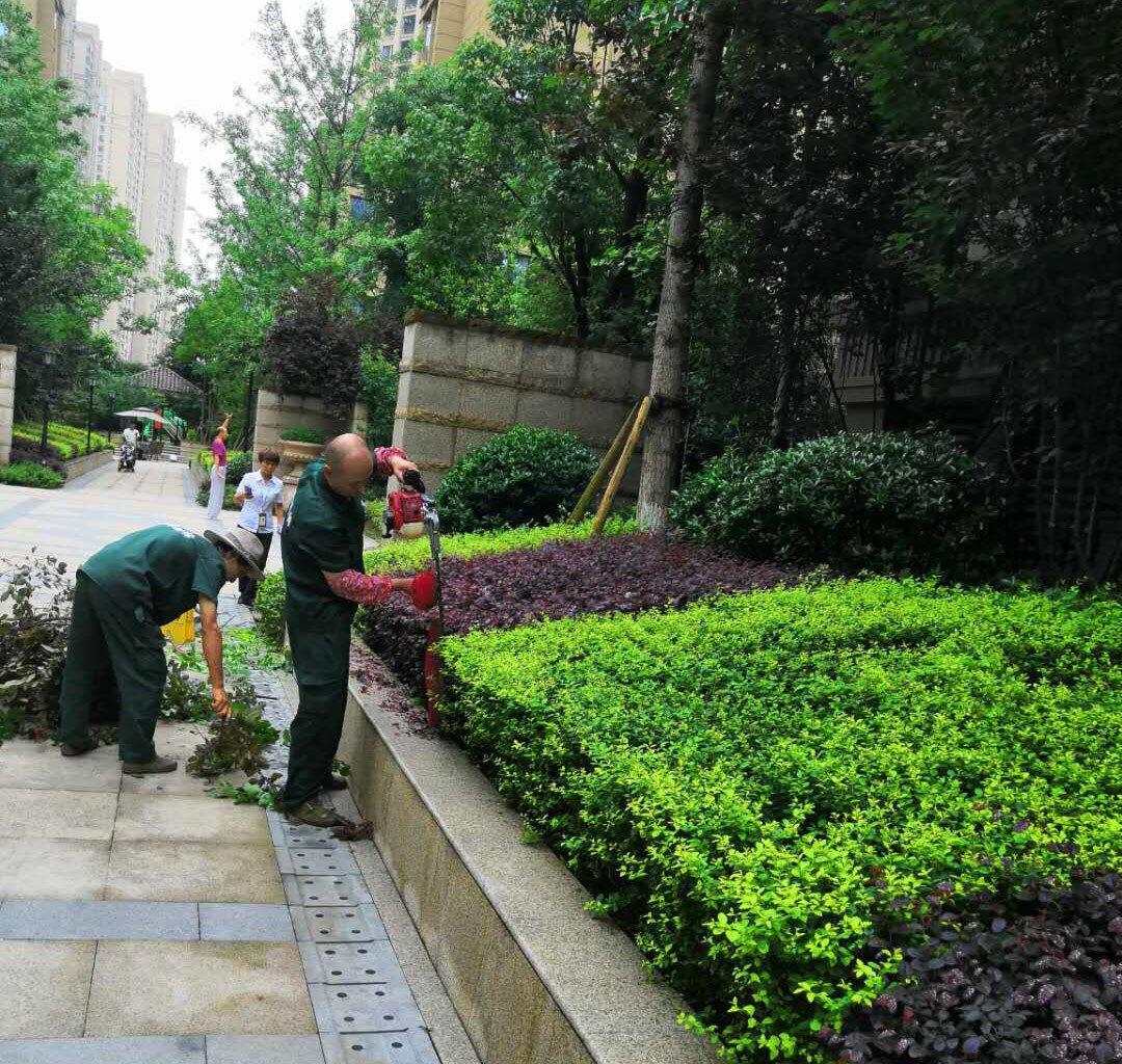 绿化带植物培育