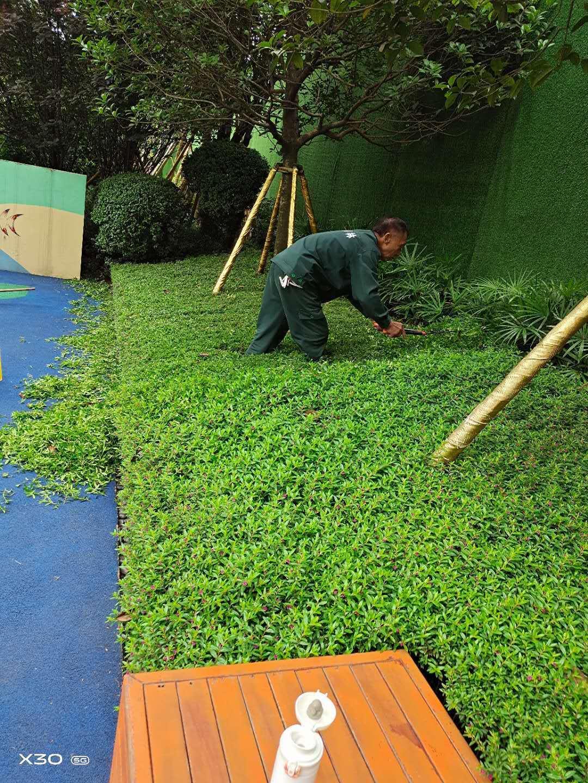 公园绿化管护