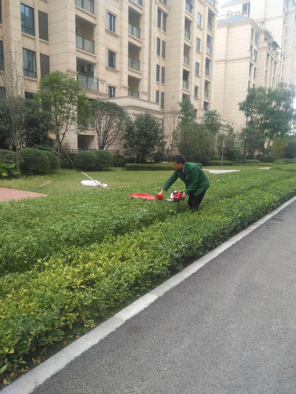 城市绿化管护