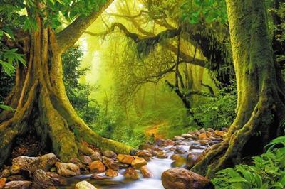 生态系统的结构