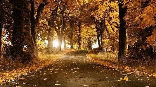 为什么秋季容易抑郁