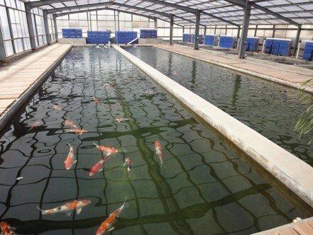 养殖场专用臭氧发生器