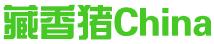中國藏香豬批發網