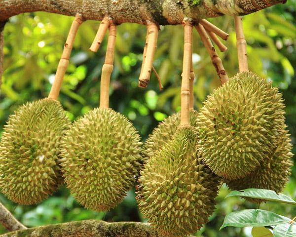 广东惠州求购产地水果长期合作