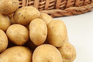 马铃薯1804