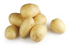 马铃薯1904
