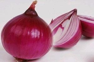 紫皮洋葱1905