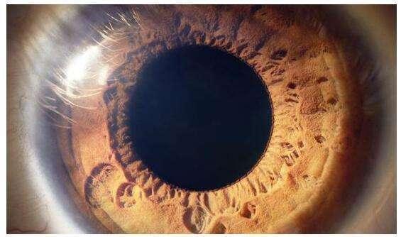 视觉搜索的发展对SEO意味着什么!