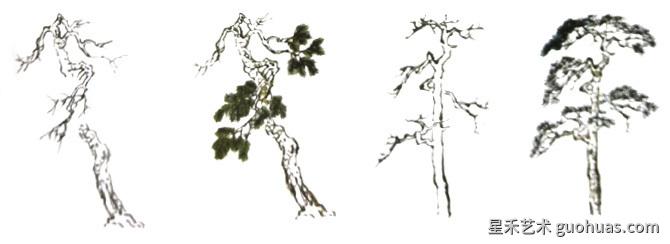 松树怎么画-松树形态特点