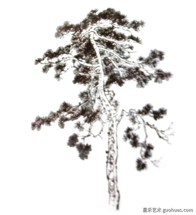 松树怎么画步骤详解