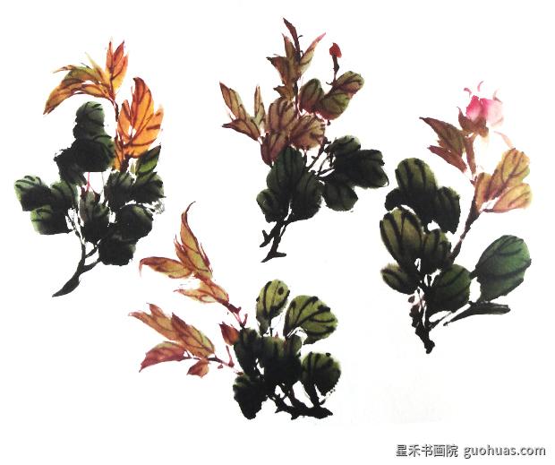 牡丹国画的叶子画法