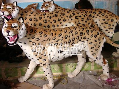 动物模型35