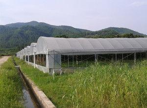 吉安青原区富滩(蔬菜)温室大棚