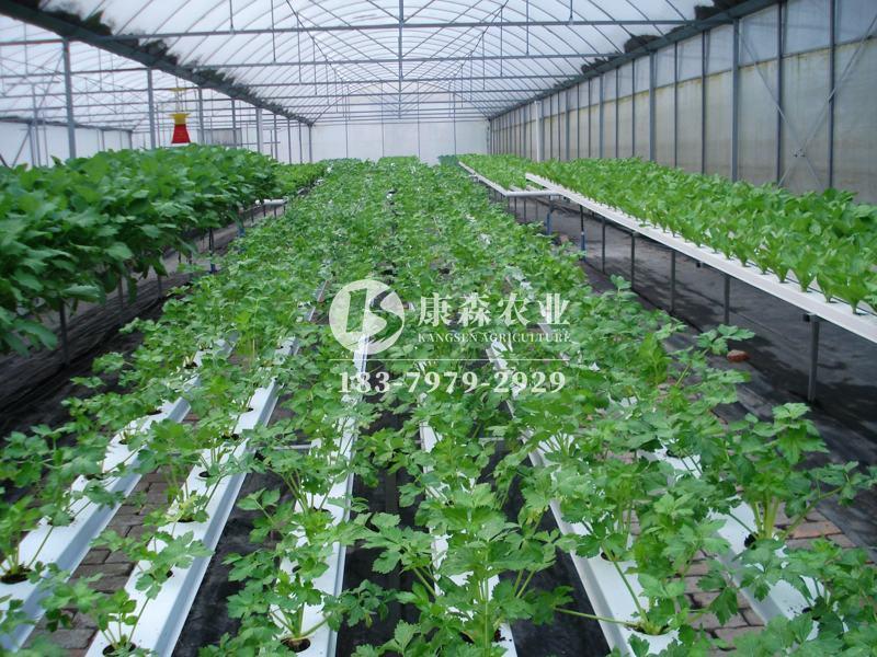 农业果蔬温室大棚