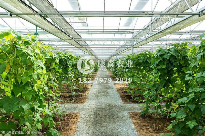 康森蔬菜温室大棚