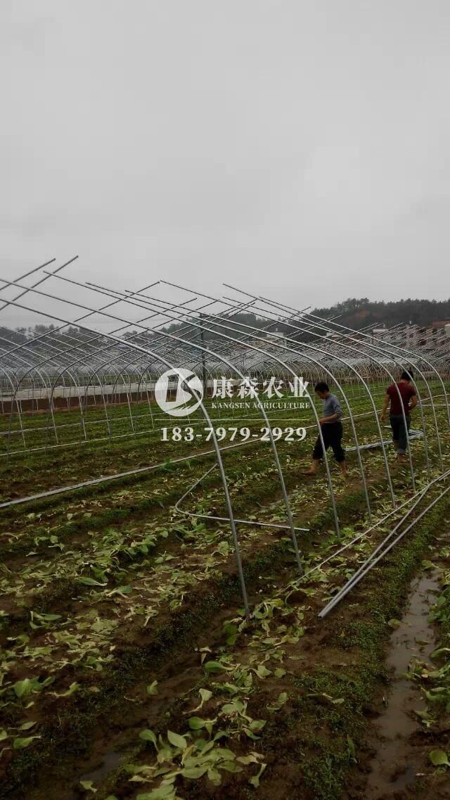 插地式蔬菜温室大棚