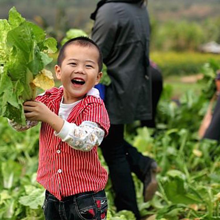 我与大自然的故事——登高望远,田园摘菜