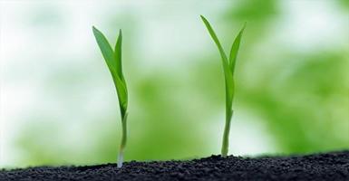 土壤有机物检测,挥发性有机物检测,VOCs检测
