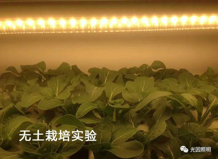 植物补光灯和普通灯的区别及植物补光灯必要性