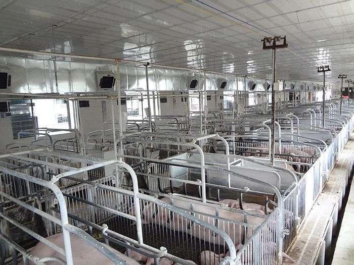养殖场降温案例